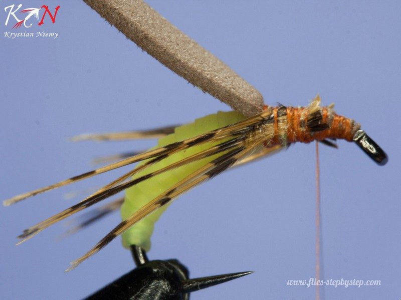 hair caddis pupa06