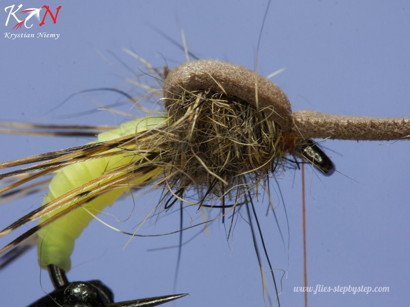 hair caddis pupa08