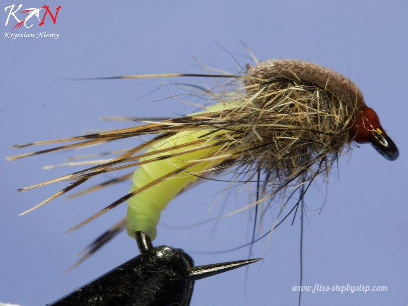 hair caddis pupa09