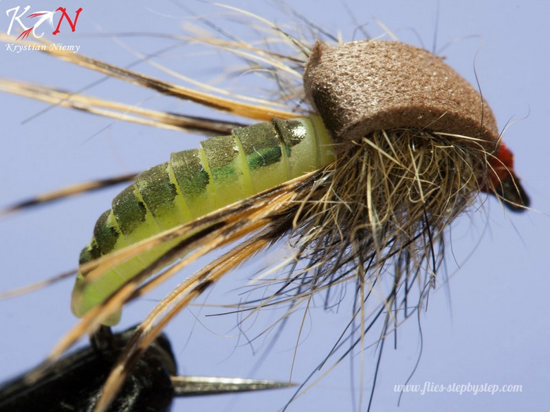 hair caddis pupa10